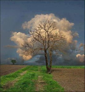 tree clouds