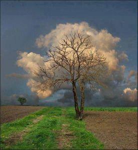 tree clouds